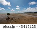 風景 石垣島 干潟の写真 43412123