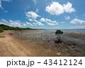 風景 石垣島 干潟の写真 43412124