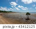 風景 石垣島 干潟の写真 43412125