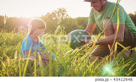 Farmers father and son preparing for eating watermelon at the farm field 43412646