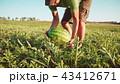 すいか スイカ 西瓜の写真 43412671