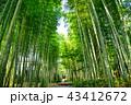 修善寺 自然 竹の写真 43412672