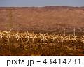 風力発電 風車 発電の写真 43414231
