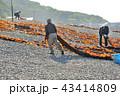 昆布漁の朝 43414809