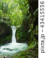 栃木県矢板市 おしらじの滝(7月) 水多め 43415556