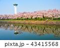 五稜郭と満開の桜の花 43415568
