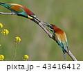 鳥 ハチクイ 小枝の写真 43416412