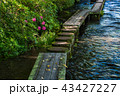 せせらぎ 川 水辺の写真 43427227