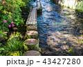 せせらぎ 川 水辺の写真 43427280