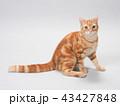 振り向いた仔猫 43427848
