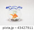 金魚鉢で泳ぐ琉金 43427911