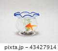 金魚鉢で泳ぐ琉金 43427914