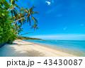 ビーチ すな 砂の写真 43430087
