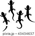 トカゲのシルエットイラストセット 43434637