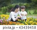 ガーデニングする親子 43439458