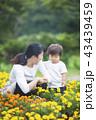 ガーデニングする親子 43439459