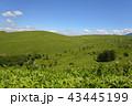 霧ヶ峰 霧ヶ峰高原 高原の写真 43445199