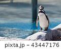 ペンギン 動物 東武動物公園の写真 43447176