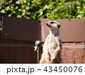 動物 43450076
