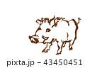 荒々しいイノシシのイラスト 筆書き 茶色 43450451