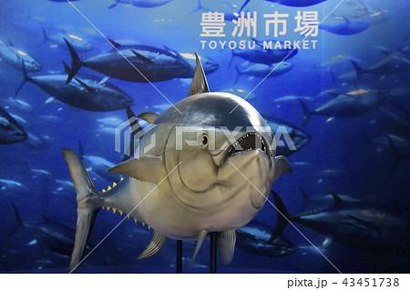 豊洲市場 マグロ模型 43451738