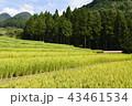 風景 日本 屋外の写真 43461534