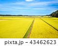 田んぼ 田園 秋の写真 43462623