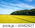 田んぼ 田園 秋の写真 43462627