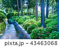三室戸寺 紫陽花 花の写真 43463068