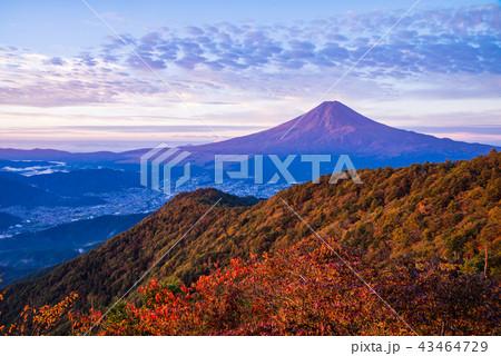 (山梨県)紅葉の三ツ峠山から富士山 夜明け 43464729