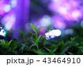 ライトアップされた木々 43464910