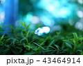 ライトアップされた木々 43464914