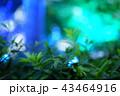 ライトアップされた木々 43464916