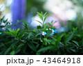 ライトアップされた木々 43464918