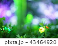 ライトアップされた木々 43464920