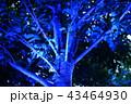 イルミネーションの木々 43464930