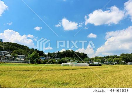 爽やかな青空と田んぼ 43465633