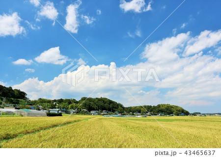爽やかな青空と田んぼ 43465637