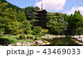 池の改修が終わった新しい池と夏の瑠璃光寺五重塔 43469033