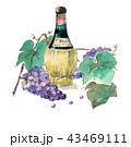 ワイン 赤ワイン 葡萄のイラスト 43469111