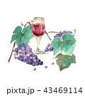 ワイン 赤ワイン 葡萄のイラスト 43469114
