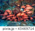魚の群れ 43469714