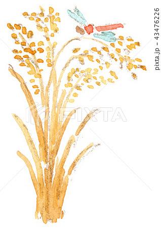 稲穂と赤とんぼのイラスト 43476226