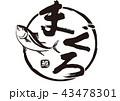 まぐろ 鮪 筆文字 水彩画 43478301