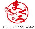 まぐろ 鮪 筆文字 水彩画 43478302