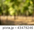 Blurred view of trees. Defocused image of summer 43479246