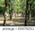 Blurred view of park. Defocused image of summer 43479251