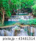 森林 林 森の写真 43481314