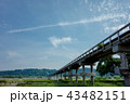 蓬莱橋 43482151