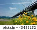 蓬莱橋 43482152